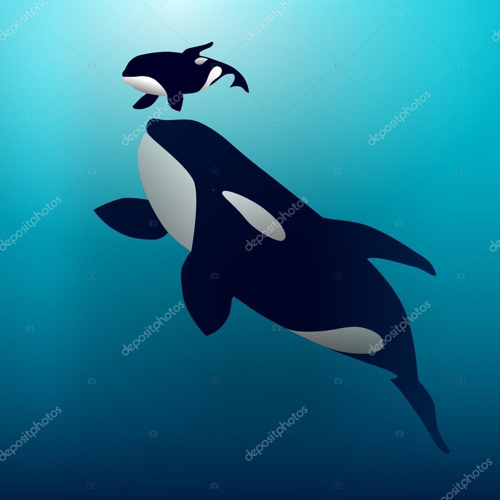 Ilustración de vector de una ballena Orca — Vector de stock ...