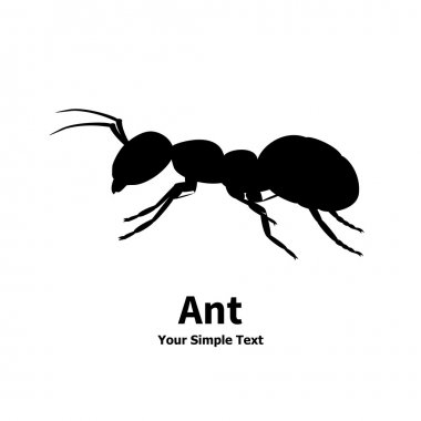 Vector illustration silhouette of ant