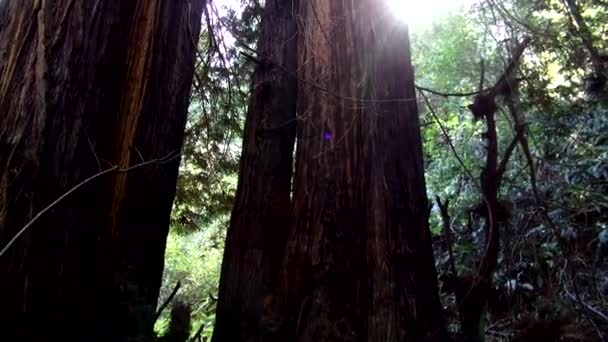 Foresta di sequoie - incredibile natura in California18
