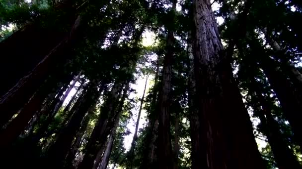 Redwood Forest -  Amazing Nature in California19