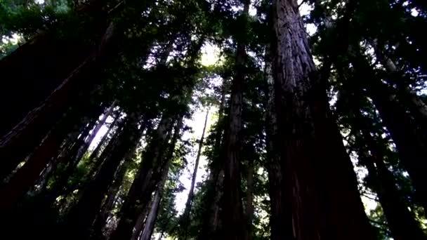 Foresta di sequoie - incredibile natura in California19
