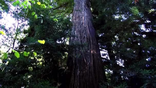 Redwood Les - úžasná příroda v California15