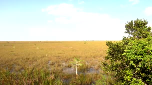 Amazing landscape in the Everglades of South Florida