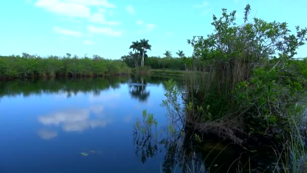 Romantic lake in the Everglades of South Florida
