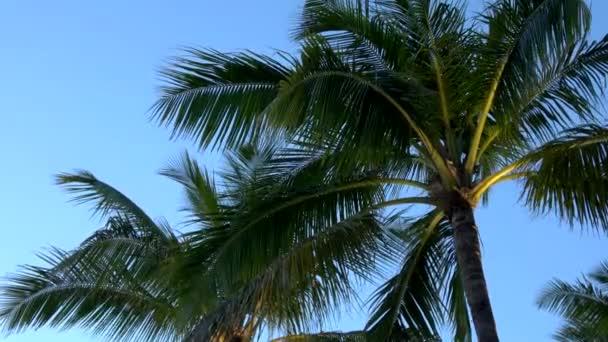 Palmy v večer v romantickém zálivu