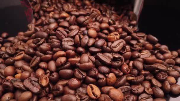 Közelkép repülés kávébab felett