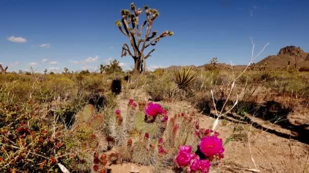 Beautiful vegetation in Arizona desert .