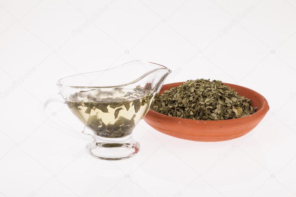 moringa infusion medicinal plant