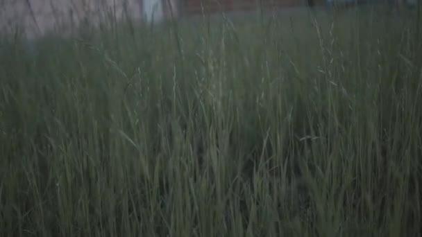 ranní trávě rosou v jarní ráno. Zpomalený pohyb