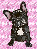 Photo Puppy french bulldog