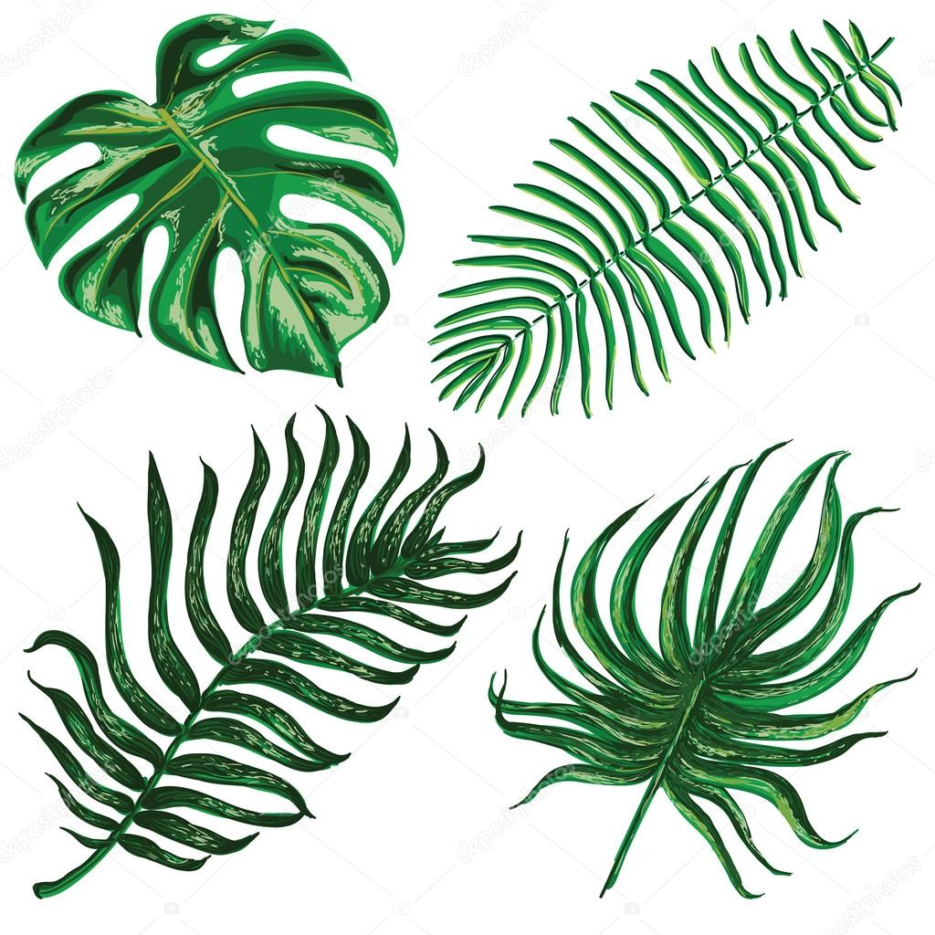 Illustrations of green leaves of palm three and exotic plants