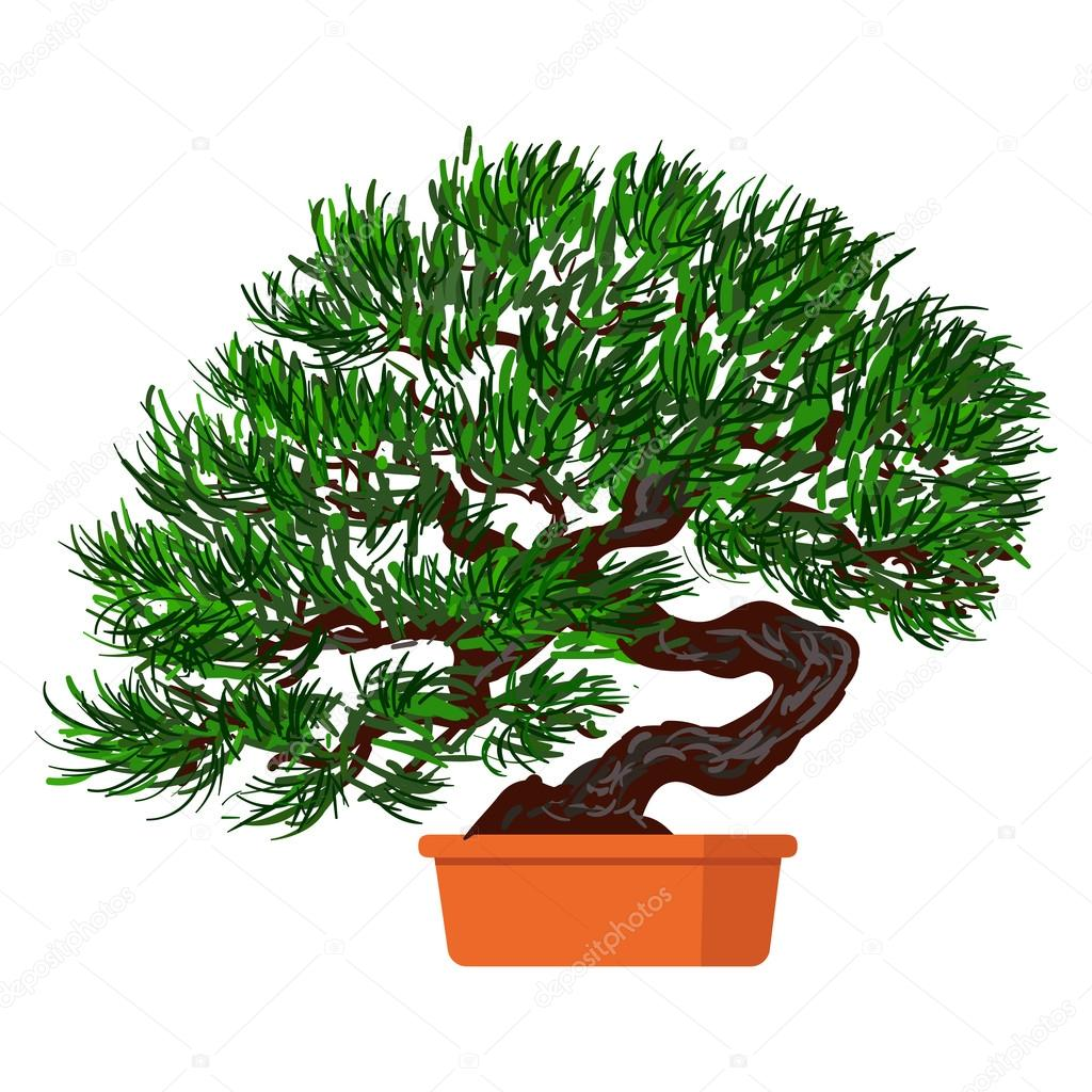 Bonsai dwarf tree.