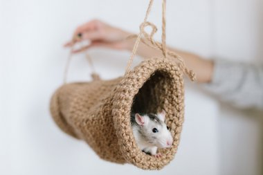 Mouse peeking out of the tunnel knitted