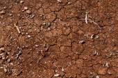 popraskané suché země