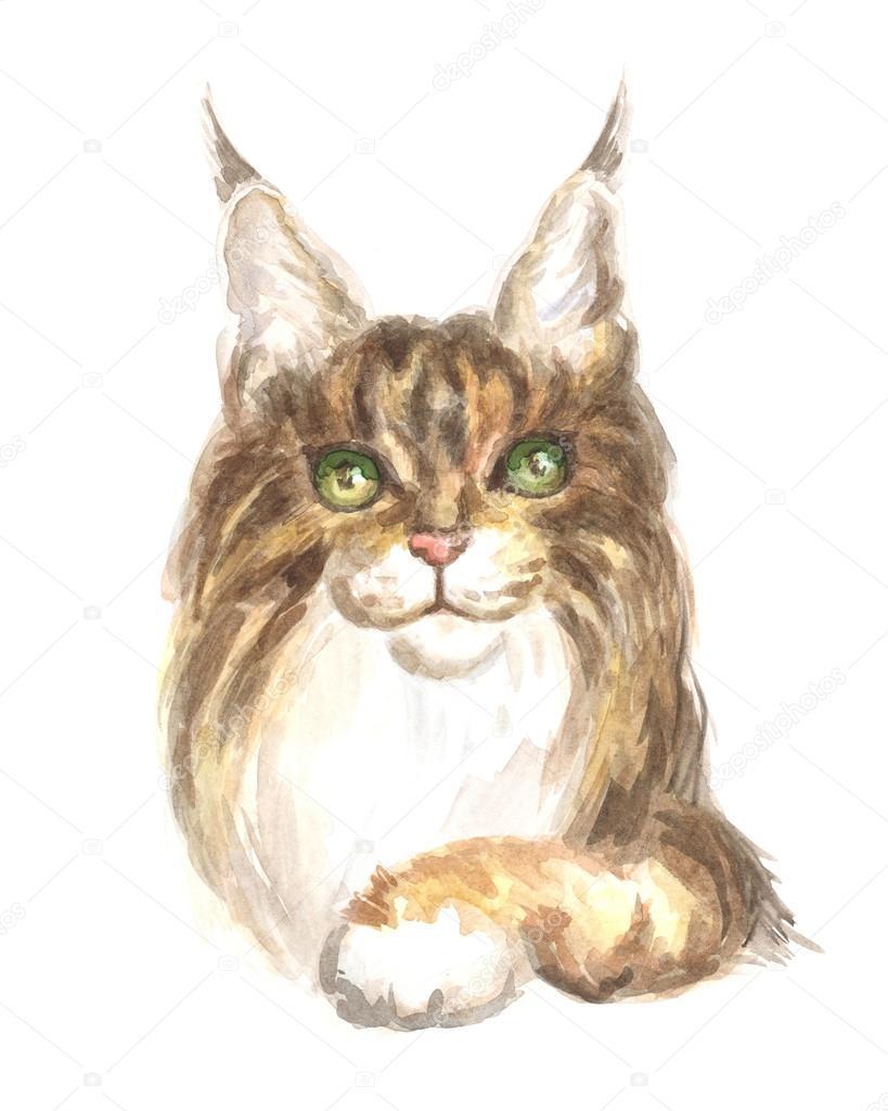 Maine Coon Kot Zdjęcie Stockowe Belova8516yandexru 113217398