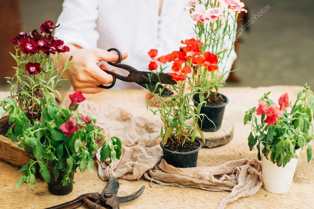 Gardener doing gardening work at a table rustic. Working in the garden, close up of the hands of a woman cares flowerscarnations. Womans hands. Garden tools with flowers.