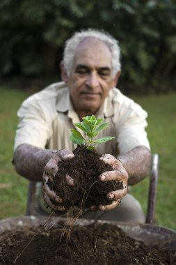 Senior man holding young plant in ecologically soil