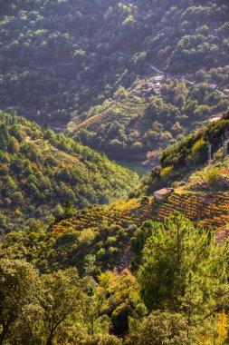 Ribeira Sacra landscape