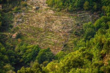 terraced vineyards in Ribeira Sacra, Galicia