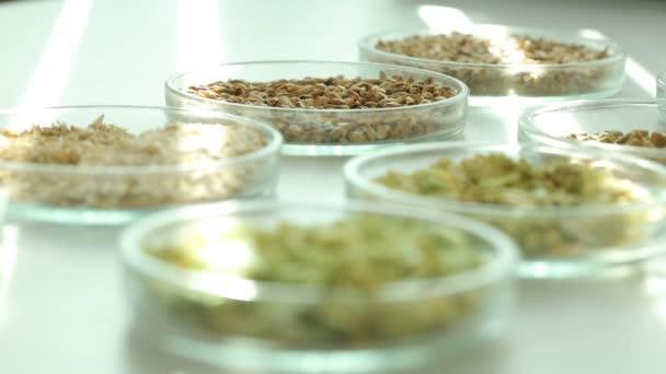 Ingredience pro přípravu na stole. Chmel, slad. Obilí, granule, hrudky ve skleněných nádobách. Paprsky světla. Pelety jsou. Laboratoř. Kvalita surovin pro výrobu piva. Pivovarnictví