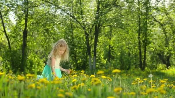 Malá holčička výdeje pampelišky na slunné louce.