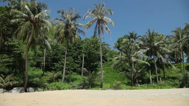 Trópusi tengerpart, pálmafák és a sárga homok.