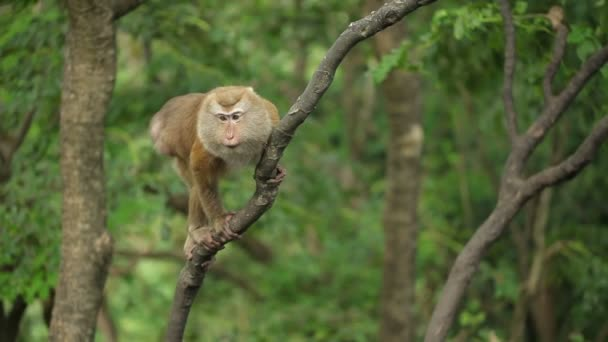 Macaque monkey on a tree.