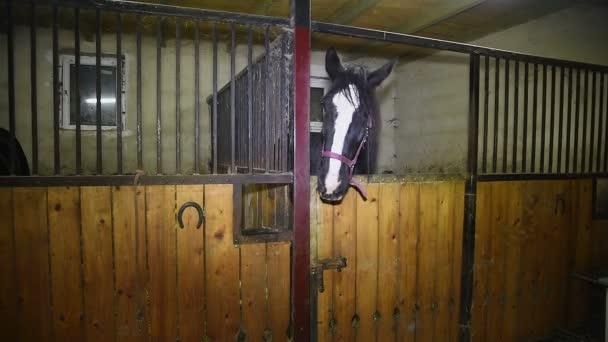 Koně na farm_02