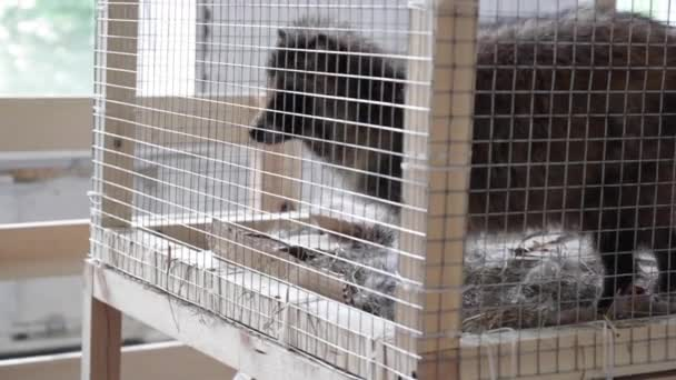 raccoons in a cage - animals in cage