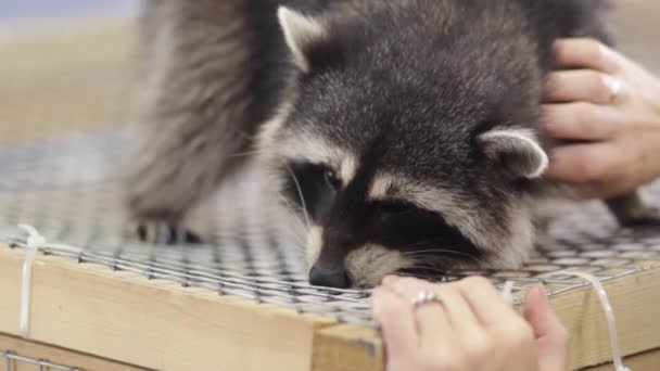 raccoon in a cage - animals in cage