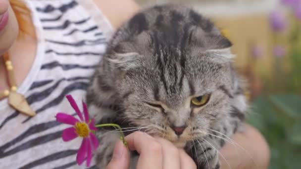 woman with scottish-fold cat