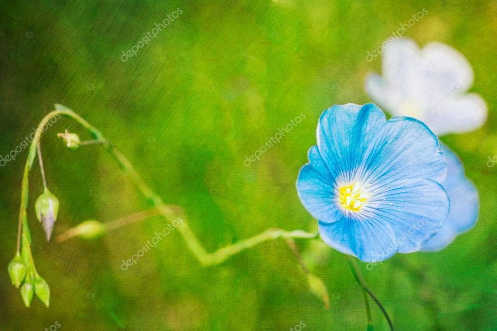 Postcard style background with blue flax flower