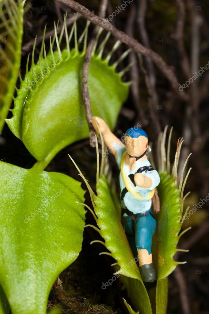 Foglia di pianta carnivora mangia uomo miniatura foto for Pianta carnivora prezzo