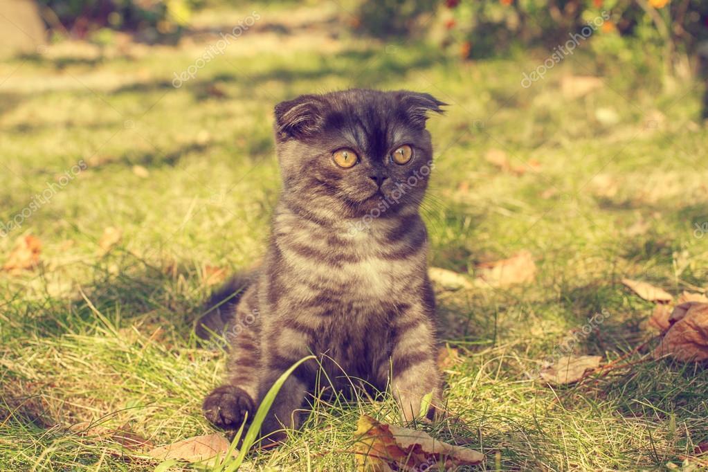 kitten on the grass in the autumn