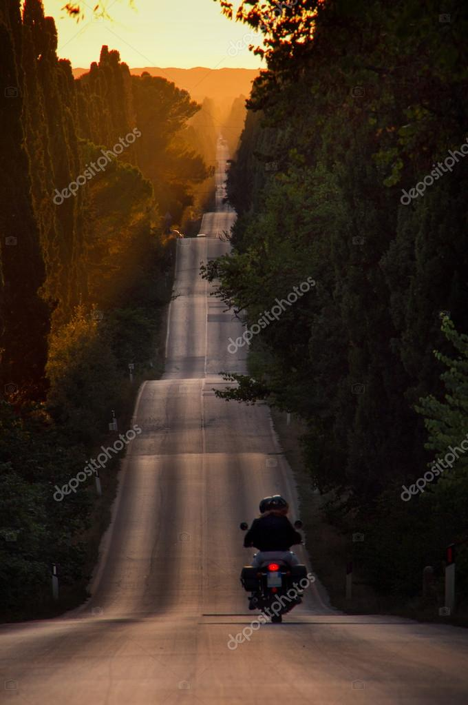 Italy, Tuscany, Castagneto Carducci, Bolgheri, Road and cypresse