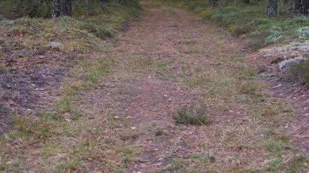 Stará lesní cesta na podzim