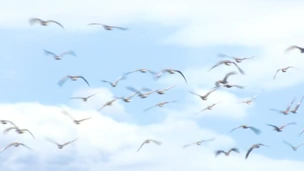 Wildgänse fliegen über den Wald