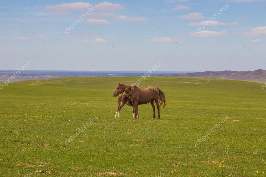 Horse with a foal in the steppes of Kazakhstan near Almaty