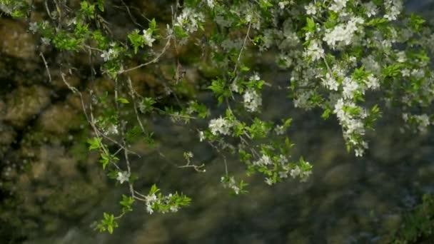 blossom, springtime, river, sunlight