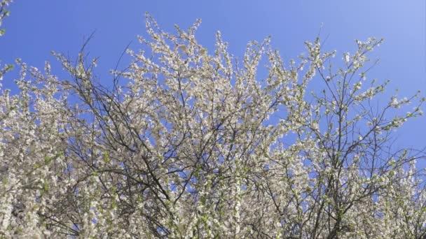 Kvetoucí strom, jarní