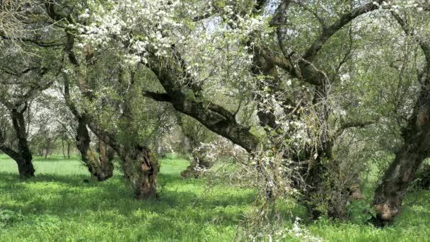 Kvetoucí strom, příroda
