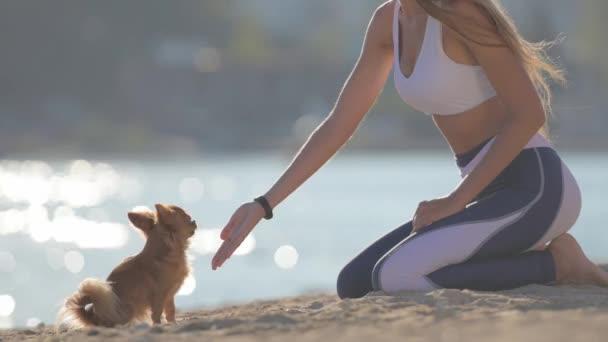 Hündin Mensch und kleiner Chihuahua-Hund hoch fünf Hand und Pfote am Sommer-Sandstrand mit Meer während Freizeit Gehorsam Aktivität