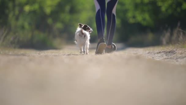 aktiver Sport gesunde Mädchenbeine in Turnschuhen auf ländlichem Pfad mit kleinem Haustier Chihuahua-Hund entlang Freizeitaktivität im Outdoor-Park in Zeitlupe