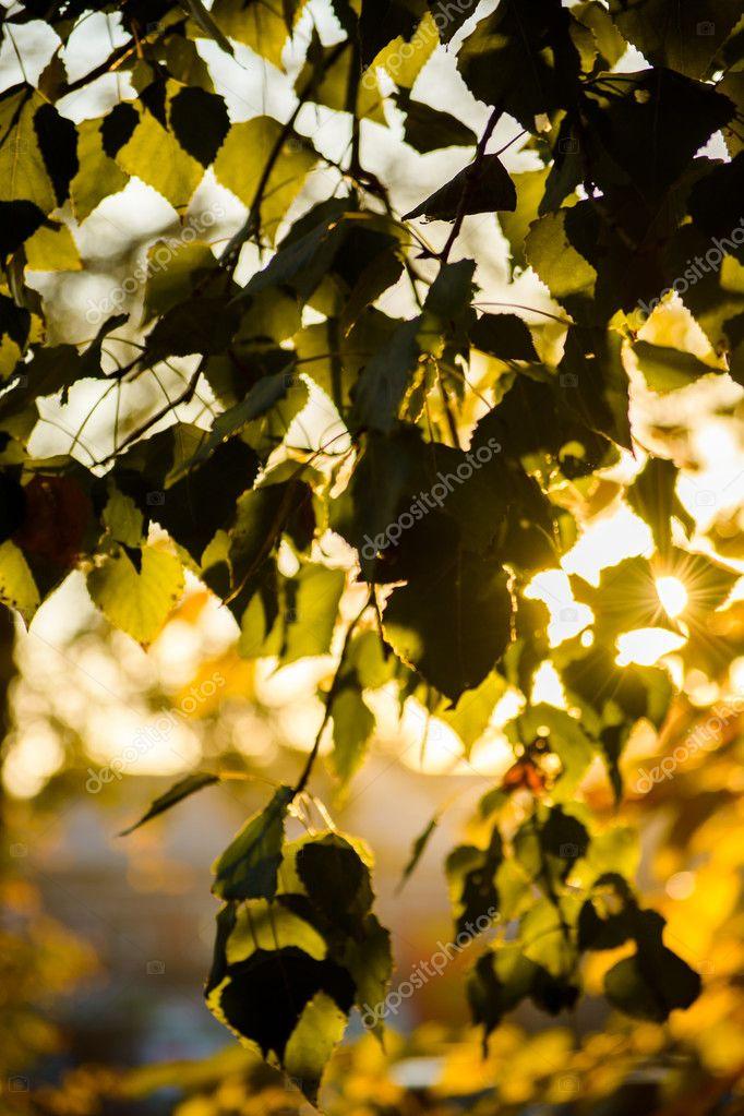 находятся фольгированной правила фотографирования через листву сайдинг дмитрове