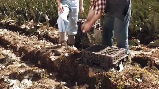 Farmers touching and inspecting soil quality.