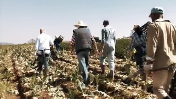 Farm multiracial workers in field