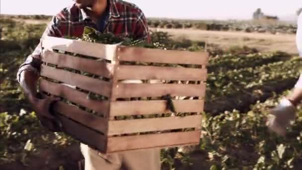 Mezőgazdasági termelők és munkavállalók halad betöltött kosarak