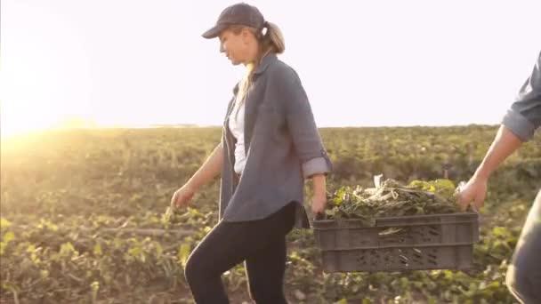 Pár farmářů nošení a načítání košíky