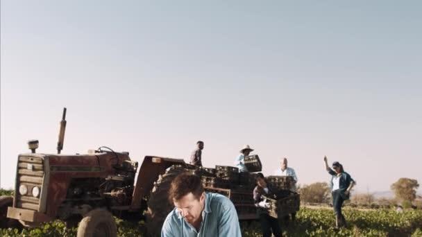 farmer inspecting organic spinach crop