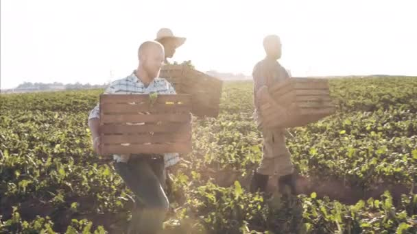 Farmers and workers carrying and loading baskets